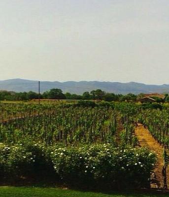 Destination wedding in sicilian winery